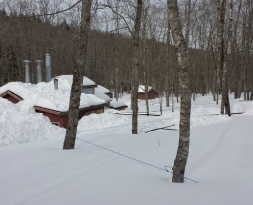 Maple Sugar Camp and Sap Lines Buried In Snow