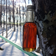 Nova Scotia Maple Syrup Bottle on Maple Sap Line